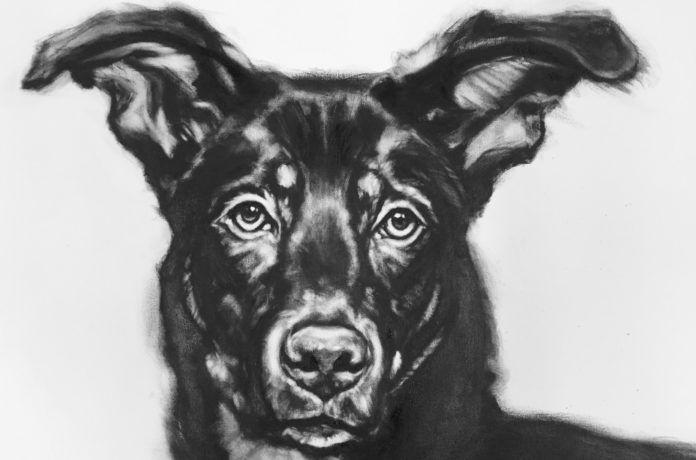 Czarno-biały obraz przedstawiający psa