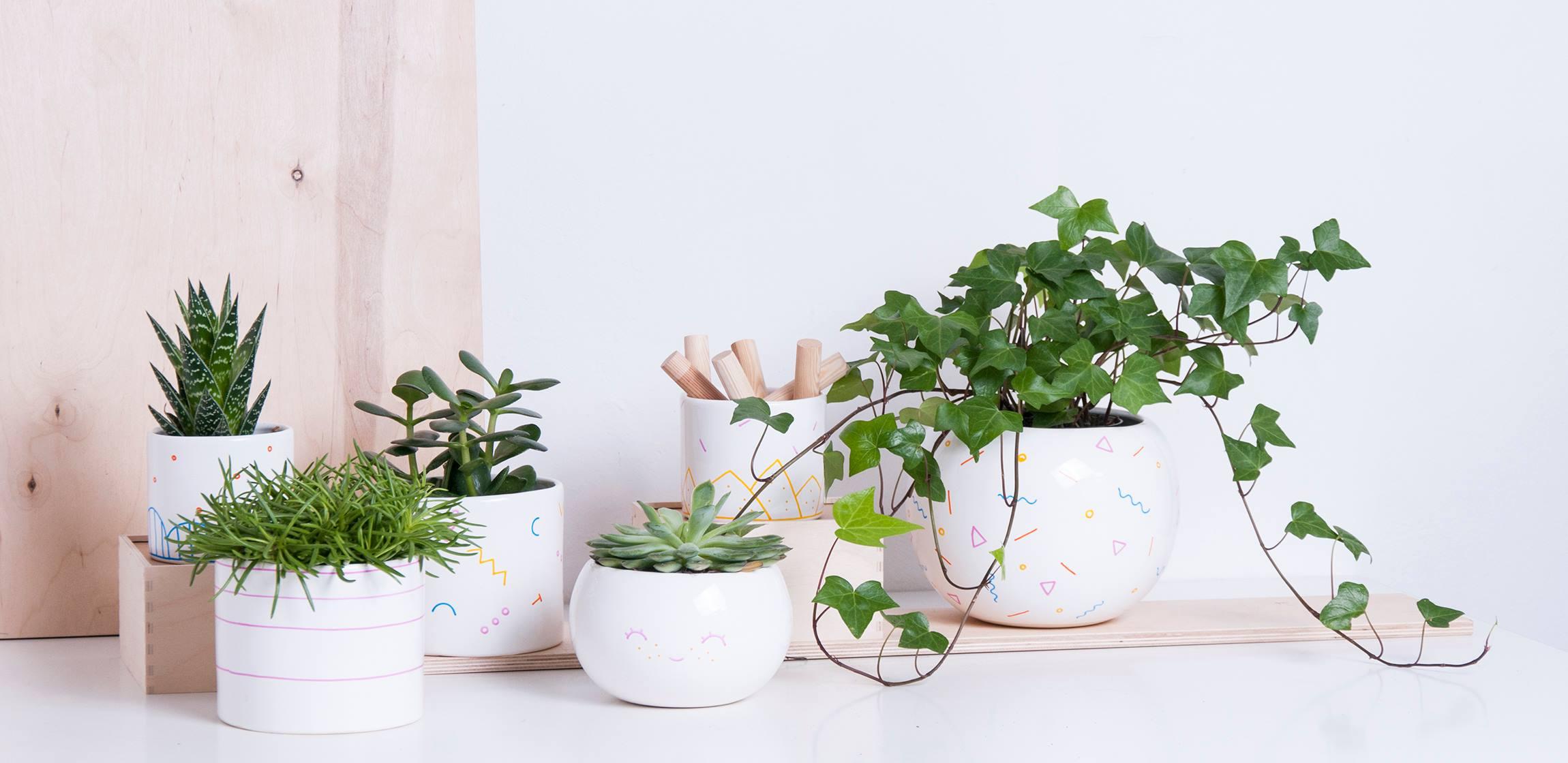 Białe doniczki z zielonymi roślinkami