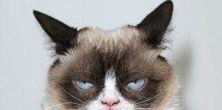 Kot z wkurzonym wyrazem pyska
