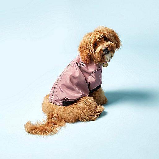 Kudłaty pies w różowej kurteczce