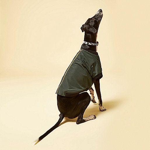 Pies w bluzie na zoltym tle