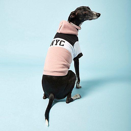 Pies w różowej bluzie