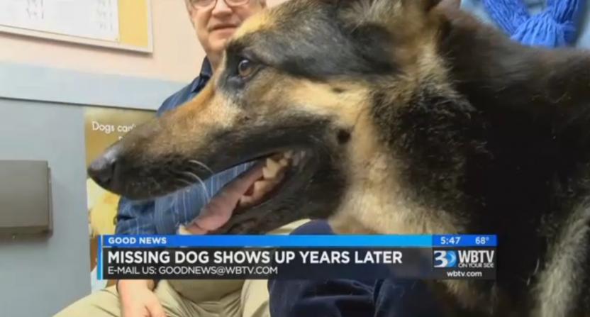 obrazek przedstawia głowę psa