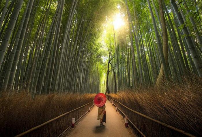 Na zdjęciu znajduje się człowiek jadący przez las rowerem