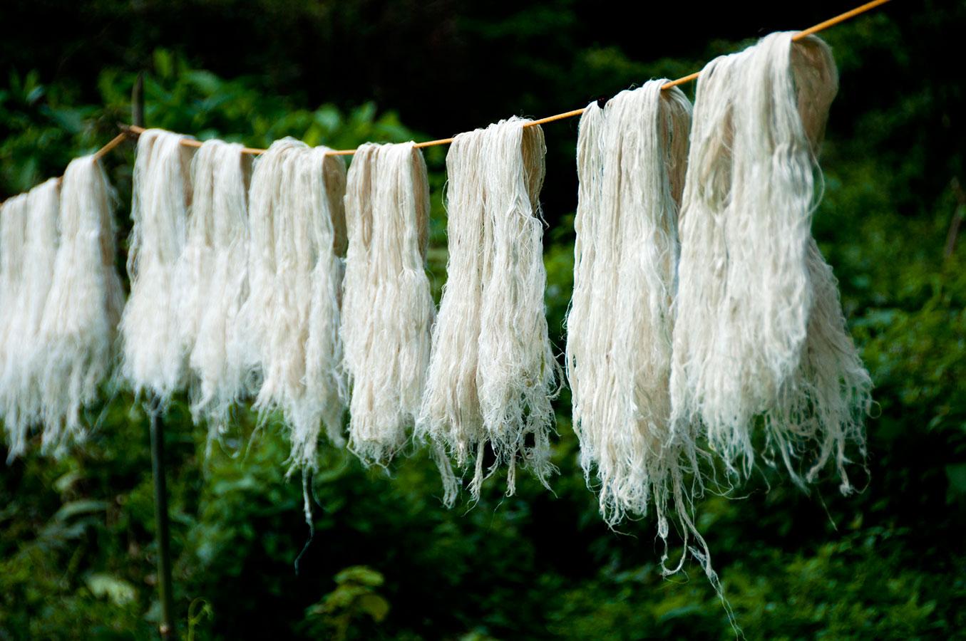Wiszące na sznurku pośród zieleni włókna z ananasa przypominające bardzo jasne włosy