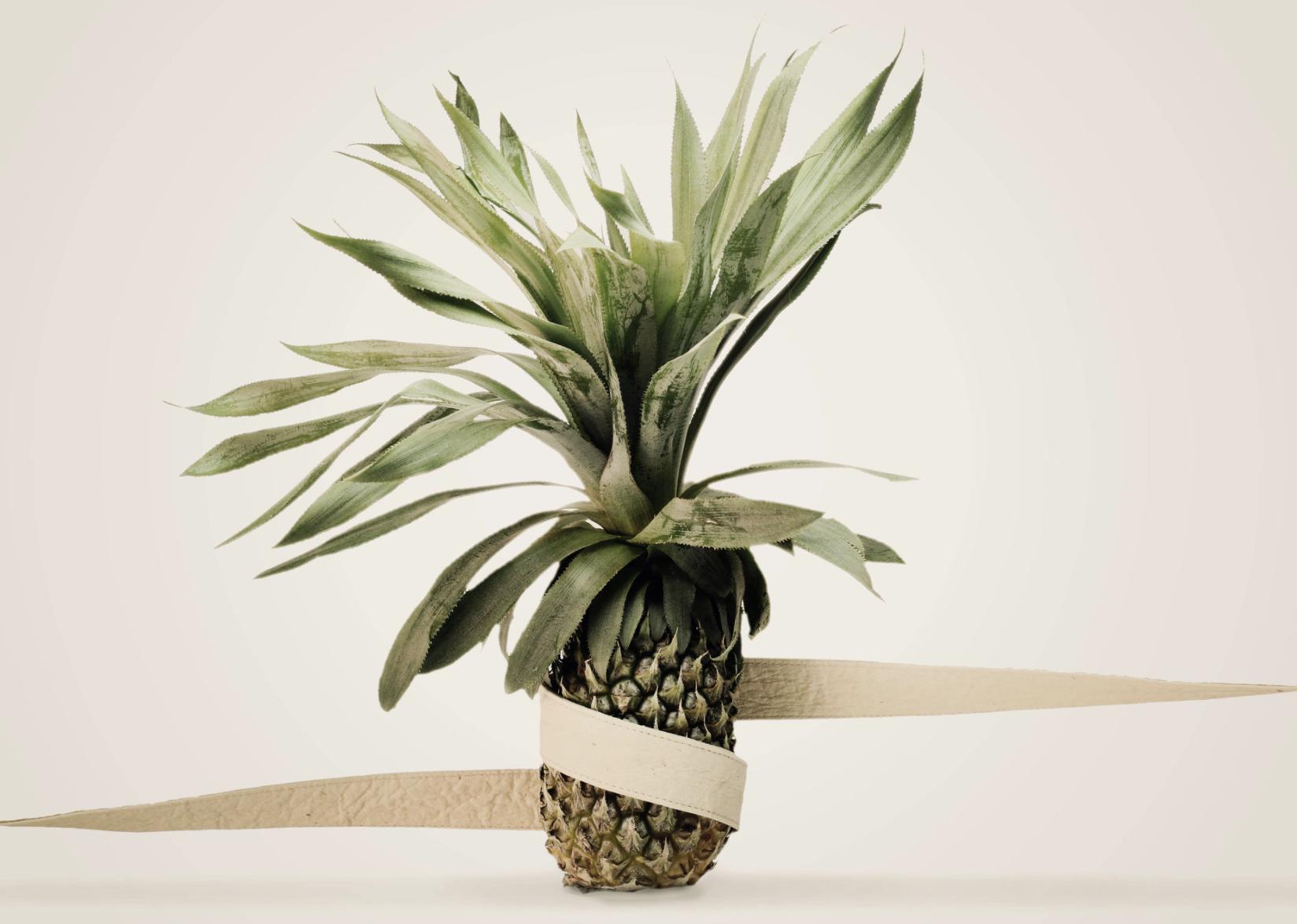 Fotogrfaia kolorwa przedstawiająca ananasa przewiązanego kremowym paskiem skóry, Tło zdjęcia również jest kremowe.