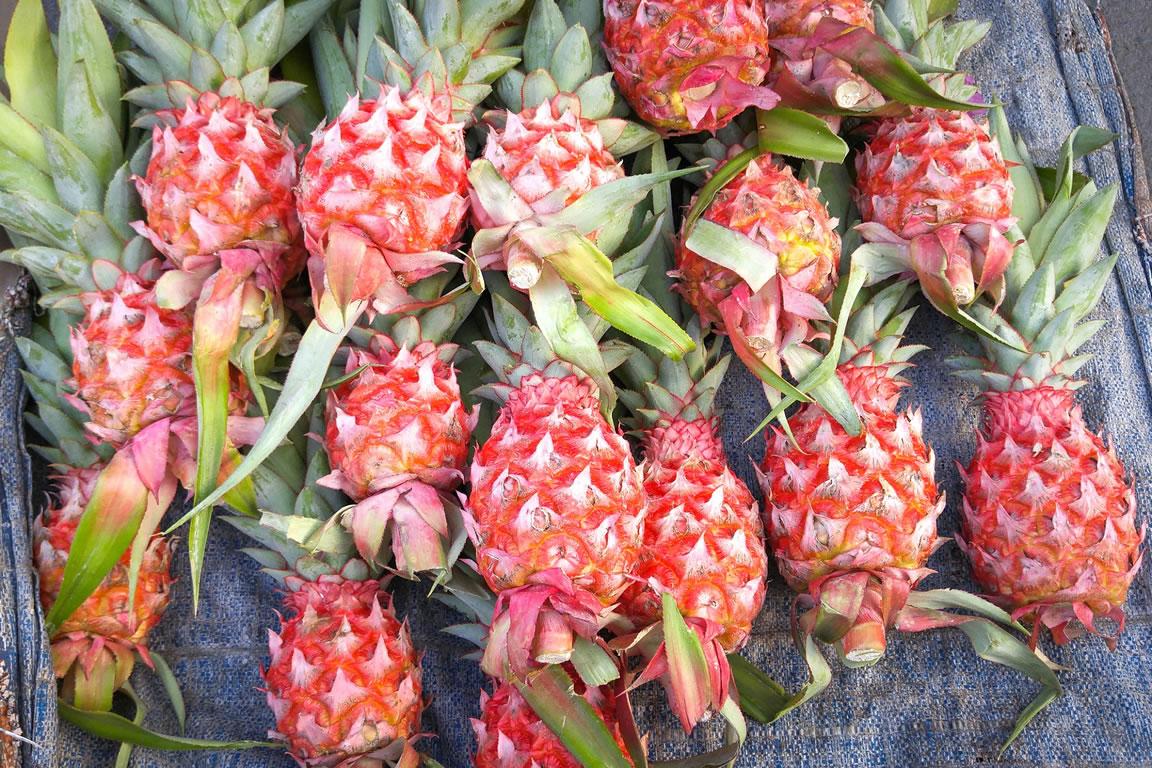 Zdjęcie przedstawia kilkanaście ułożonucj obok siebie różowych, genetycznie zmodyfikowanych ananasów