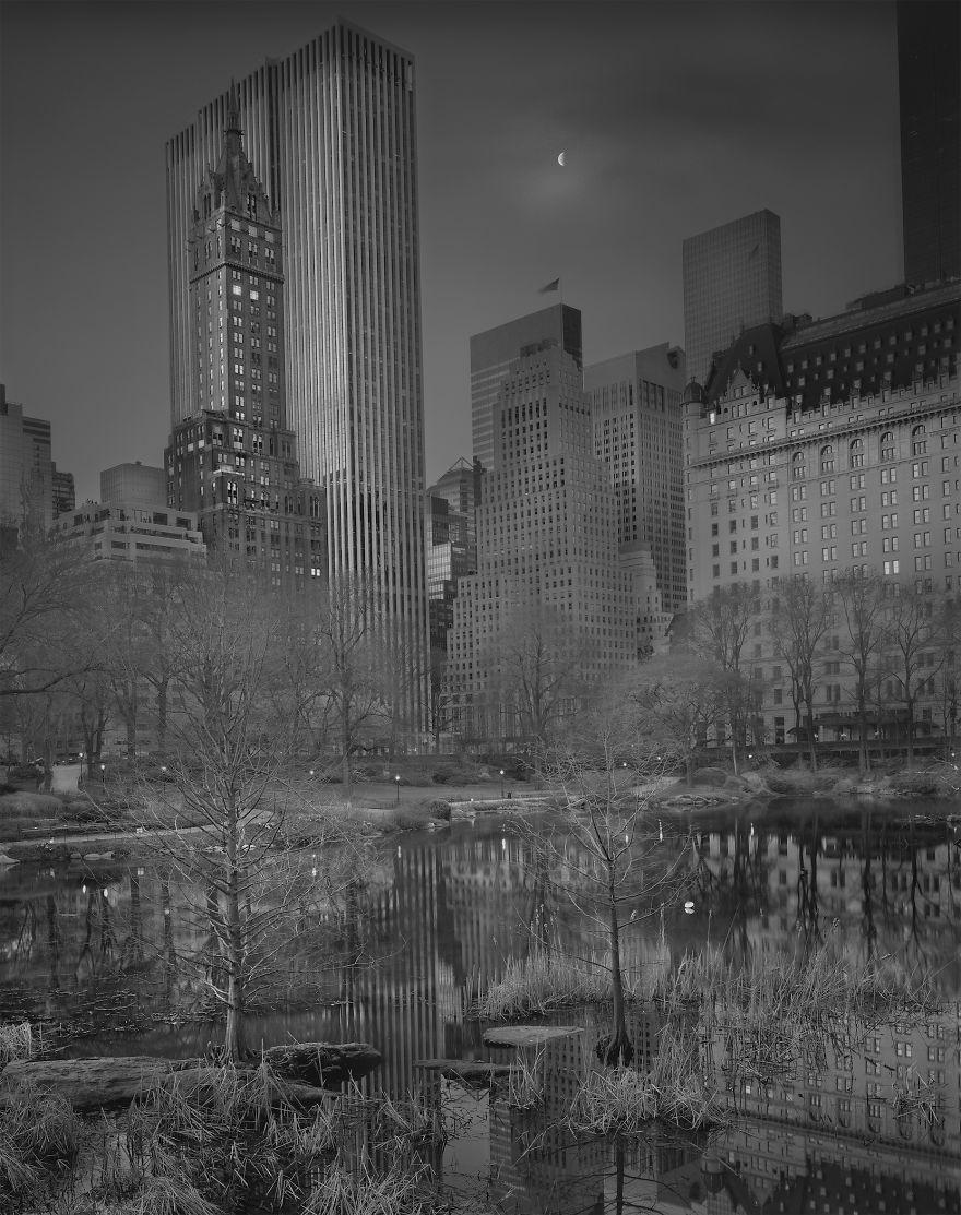 Zdjęcie przedstawia bezlistne drzewa. W tle znajdują się budynki wieżowców