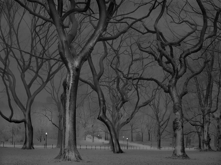 Na zdjęciu znajdują się bezlistne drzewa