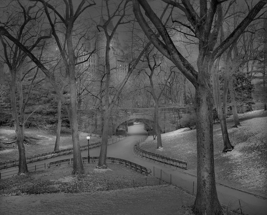 Zdjęcie przedstawia skrzyżowanie parkowych alei i rosnące przy nim drzewa