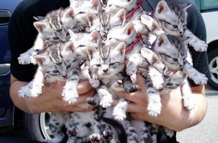 Mężczyzna trzymający na rękach bardzo dużo małych kotków