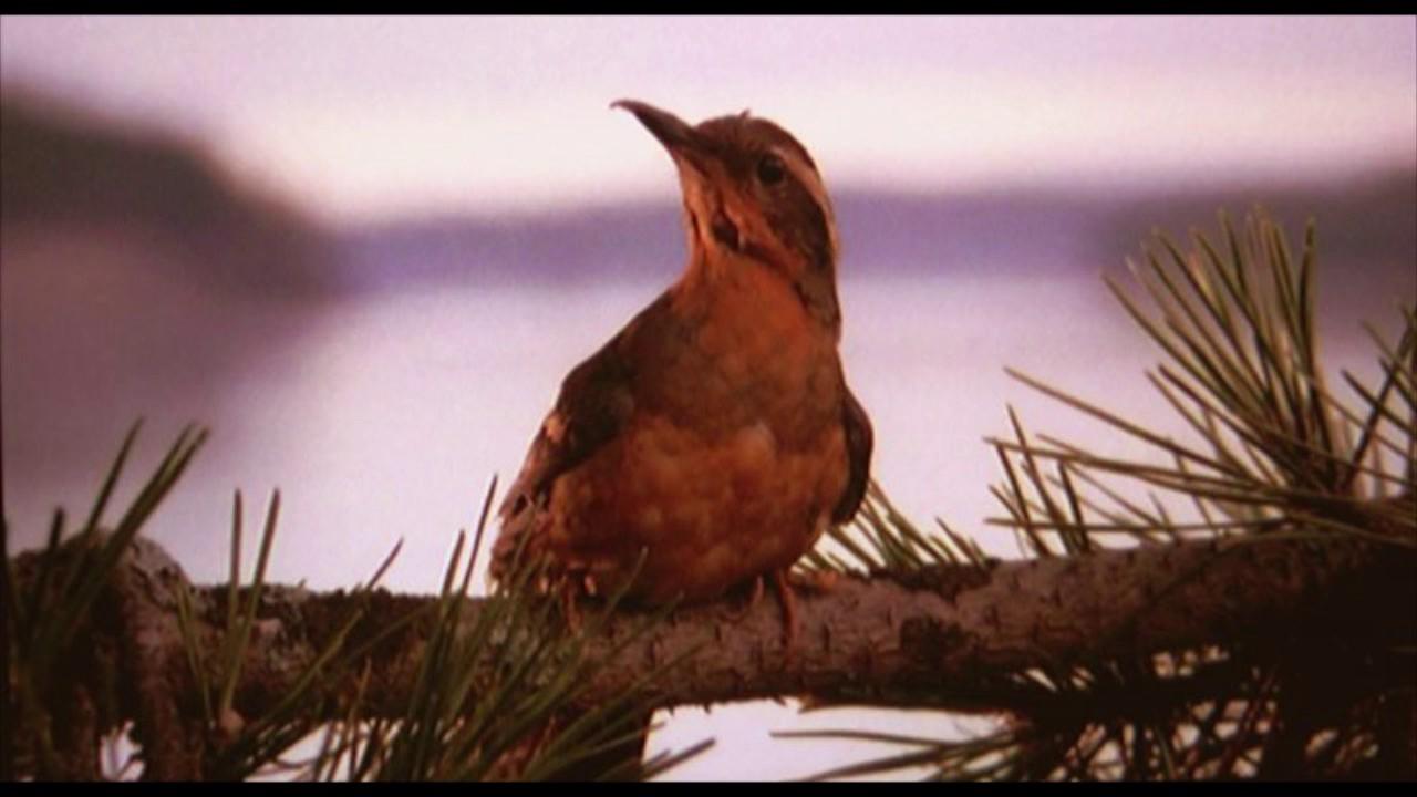 Ptak siedzacy na galezi patrzacy w lewo