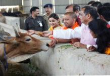 Tłum ludzi, którzy patrzą się na krowę stojącą za murkiem