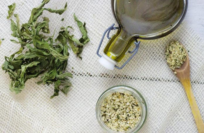 Roślina konopi indyjskiej, obok olej, łyżka i nasiona