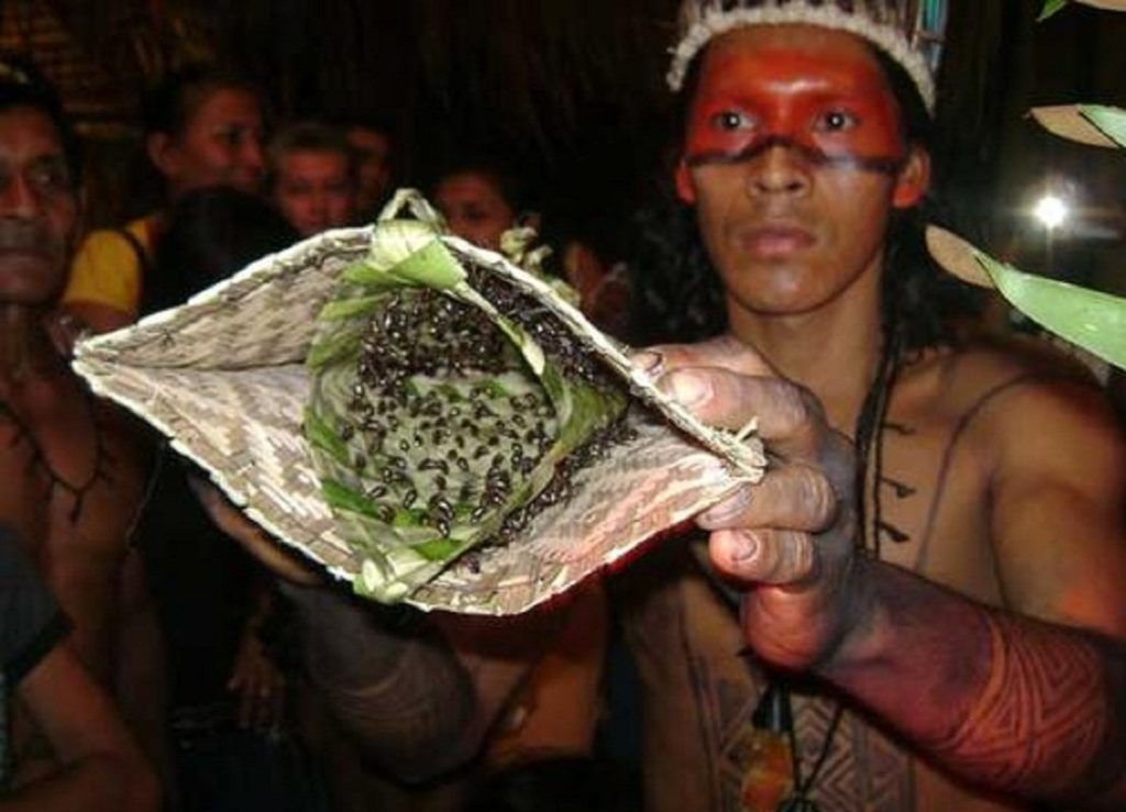 Lokalny uzdrowiciel ludu Satere Mawe pokazuję ręcznie tkaną rękawice, która na potrzeby rytuału wypełniona jest mrówkami buna, które są bardzo agresywne. Ma pomalowane na czerwono pół twarzy, w tle niewyraźnie widać innych ludzi.