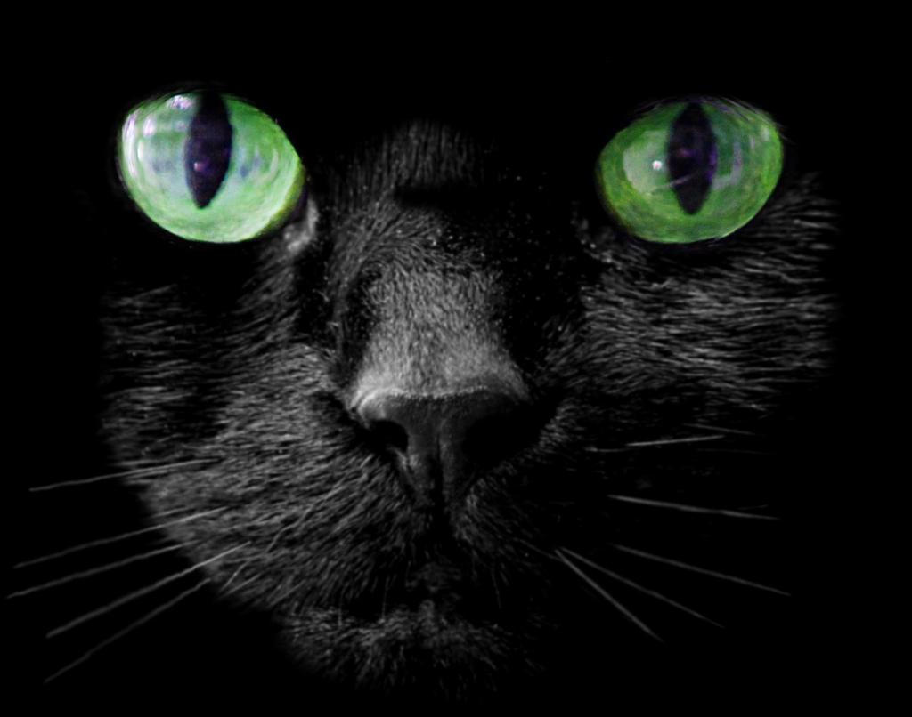 Głowa czarnego kota z zielonymi oczami