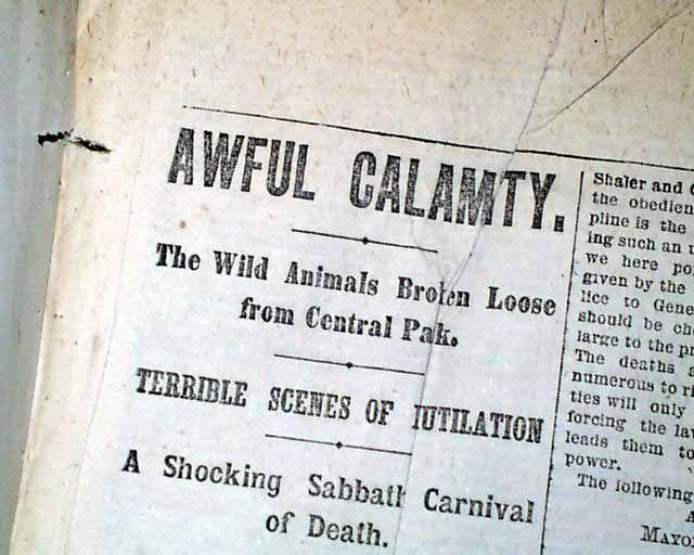 Zdjęcie starej gazety z urywkiem artykułu o ucieczce zwierząt z ZOO