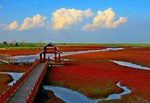 Drewniana platforma, ktora zostala zbudowana do podziwiana czerwonej plaży w chinach. Widać wodorosty, chmury, błękit nieba oraz wijący się nurt rzeki.