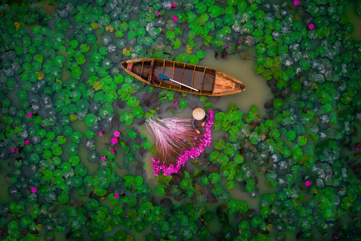 Zdjecie z lotu ptaka. Widać łódkę, różowe kwaity, zielone liście i charakterystyczny dla Azjatów, stożkowy kapelusz.