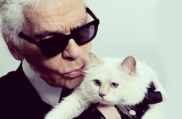 Siwy mężczyzna w ciemnych okularach trzymający białego kota