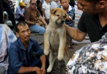 Piesek trzymany za kark w powietrzu