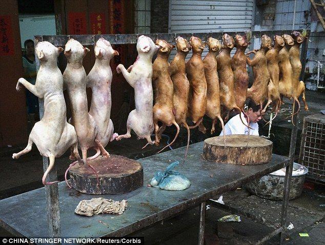 Gołe, opalone psy wiszące na hakach za głowy