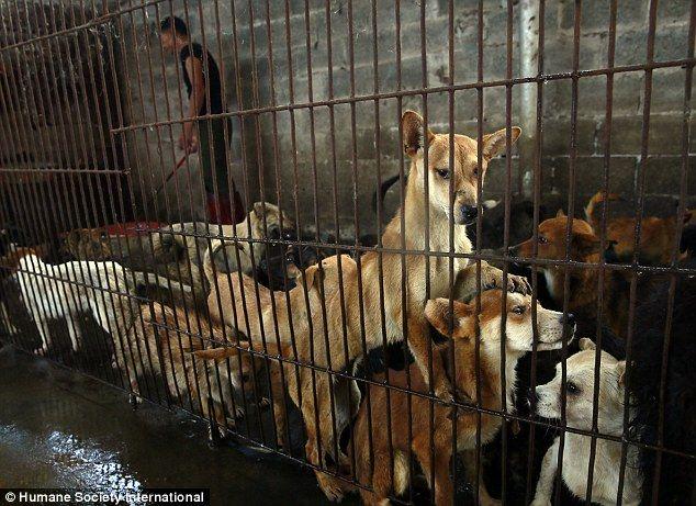Wiele psów stłoczonych razem w małej klatce