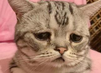 Kot ze smutnym wyrazem pyszczka