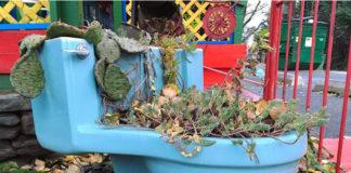 Toaleta z kaktusami