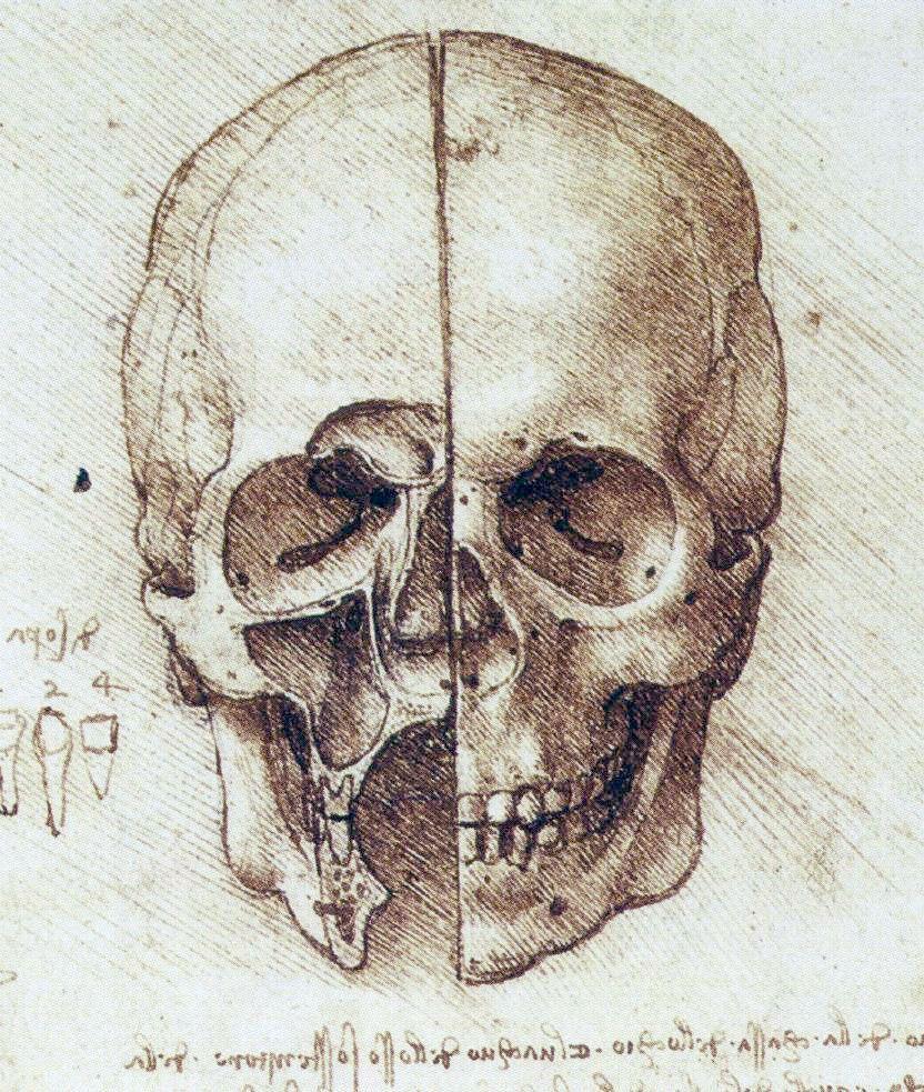 Rysunek czaszki zrobionej przez Da Vinciego.