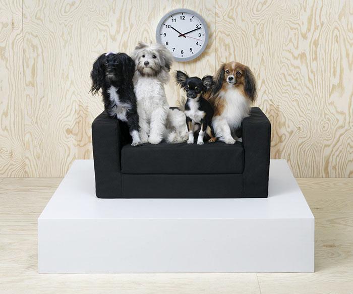 Psy na małej kanapie