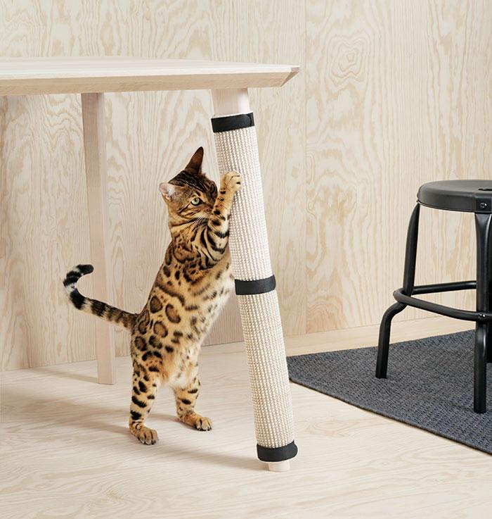 Kot drapiący nogę od stołu