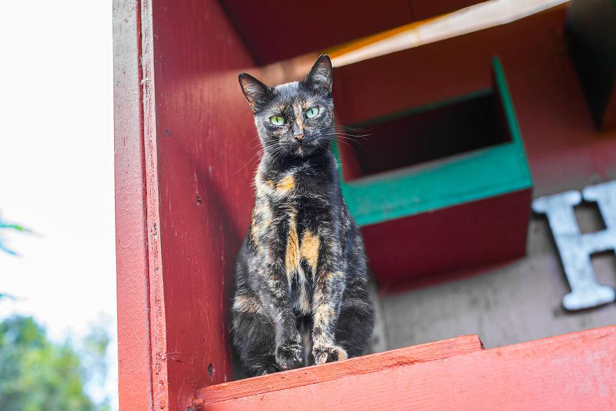 Kot patrzący z góry w obiektyw aparatu