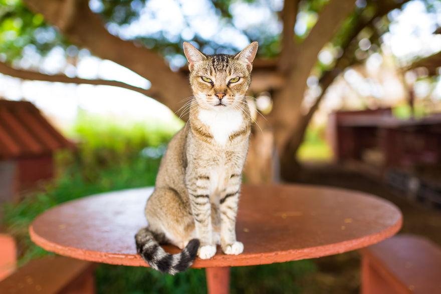Kot siedzący na stole