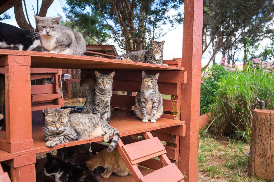 Dużo kotów schowanych w domku dla kotów