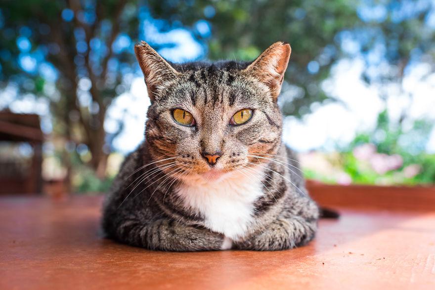 Kot leżący na stole