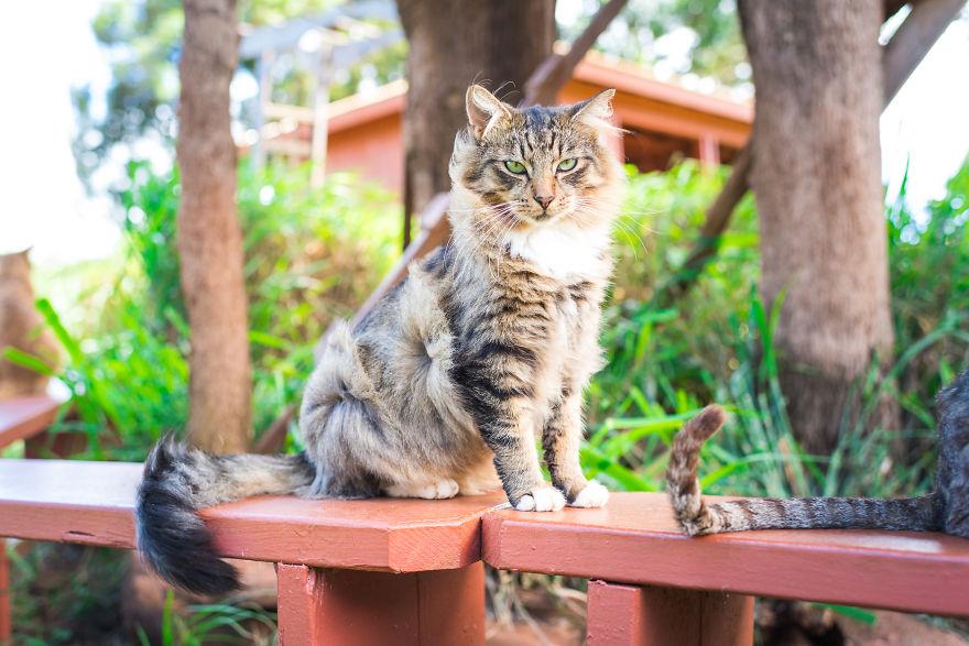 Kot siedzący na ławce
