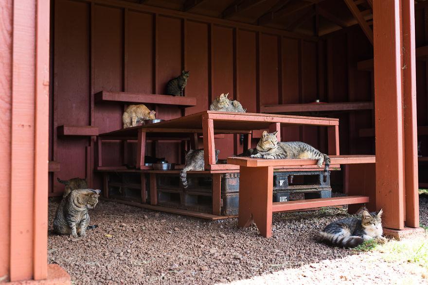 Koty leżące na metalowej konstrukcji