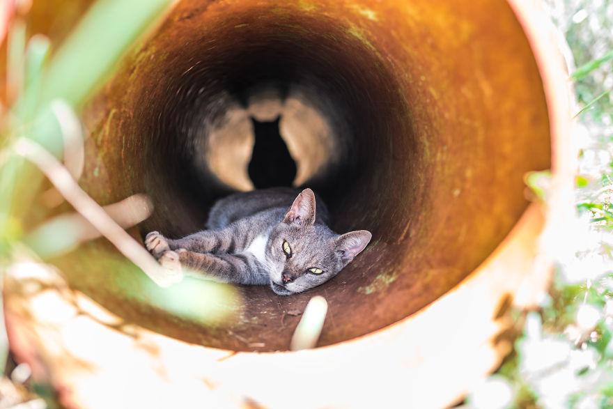 Kot leżący w rurze