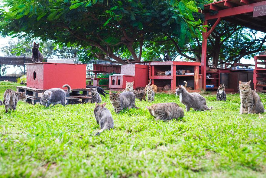 Gromada kotów na trawie