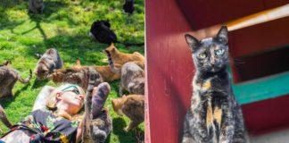 Dziewczyna leżąca wsród gromadki kotów i kot patrzacy z gory w obiektyw aparatu