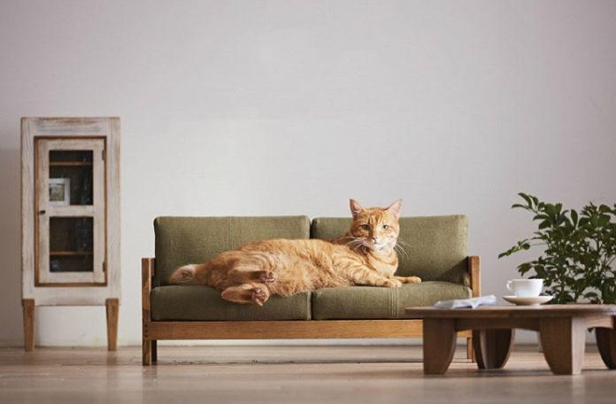 Kot leżący na małej kanapie w jego rozmiarach