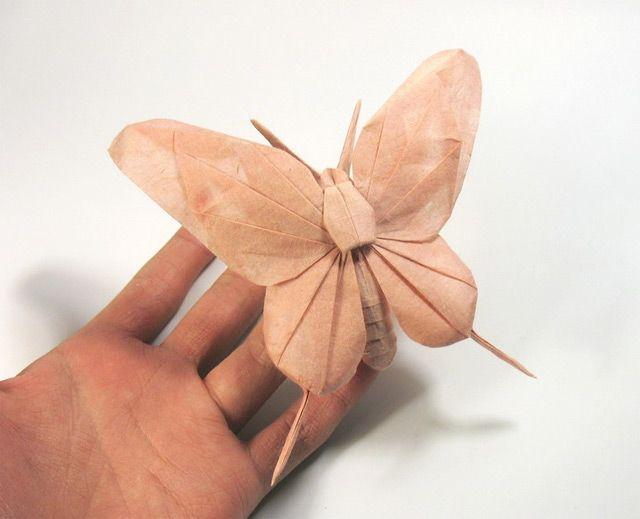 motyl - origami
