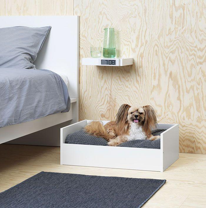 Pies leżący w sypialni na psim łóżku