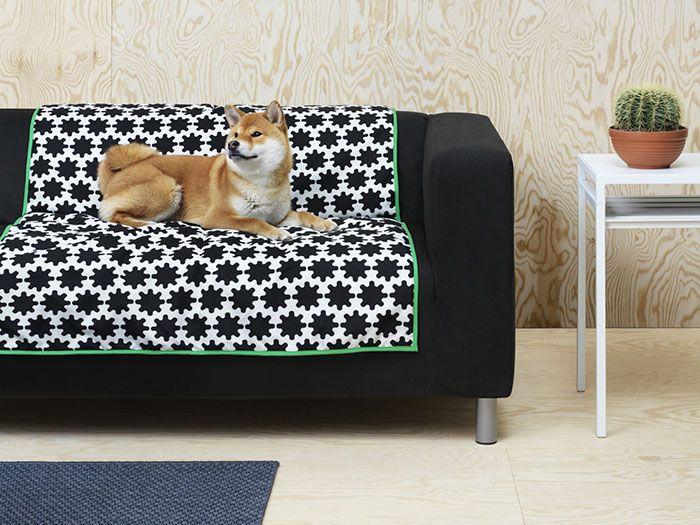 Rudy pies leżący na kanapie z narzutą