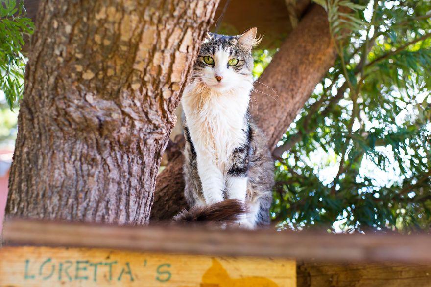 Kot siedzący na drzewie