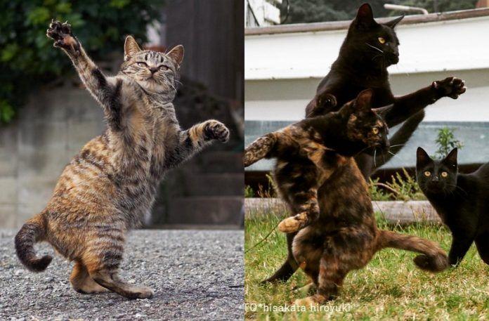 Dwa zdjęcia kotów w ruchu