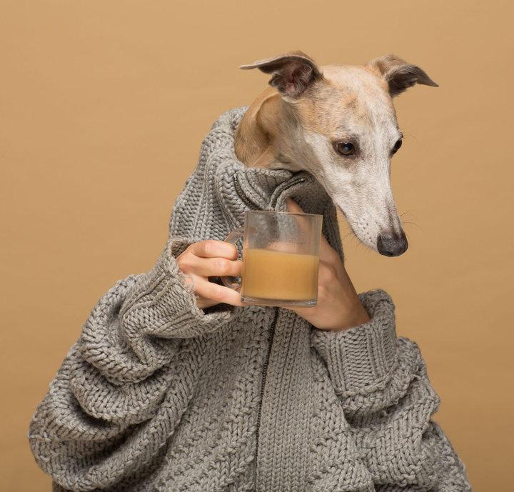 Pies ubrany w sweter pije kawę.