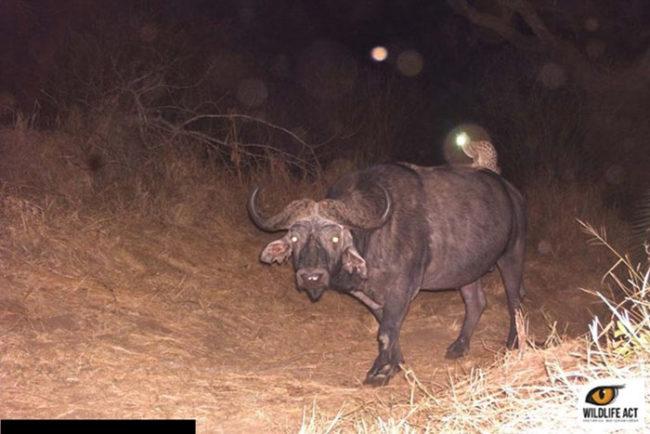 Żdjecięprzedstawiające zwierzaki nocą