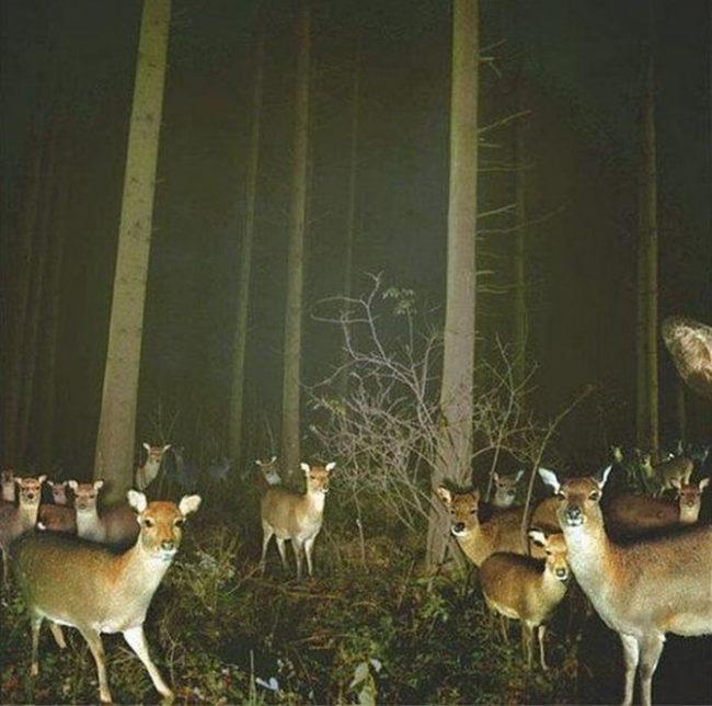 Sarny nocą w lesie